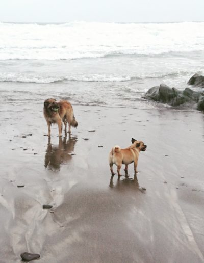 Bruno and Zebo at the beach, Rosscarbery Warren Strand, west Corkj